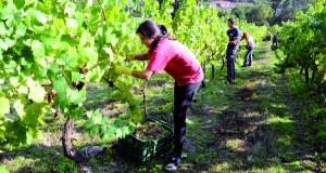 O IES O Ribeiro contará no vindeiro curso co ciclo superior en Vitivinicultura
