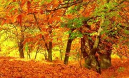 Unha ruta para desfrutar dos soutos de Vilariño de Conso no outono