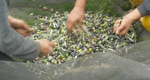 Descubrindo o oleoturismo en terras de Quiroga