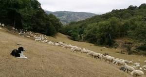 Reducións no IRPFpara gandeiros e agricultores afectados pola seca e as xeadas