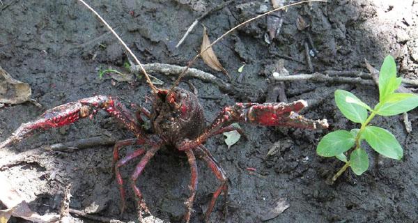 Na procura de especies invasoras, na conca do río Bibei, en Manzaneda