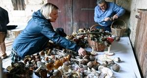 As Xornadas Micolóxicas consolídanse como cita destacada no outono de Trives