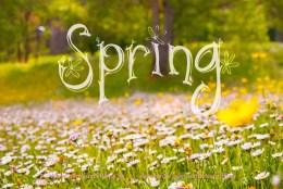 Olá Primavera