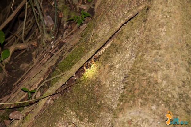 Monteverde - caminhada noturna-1