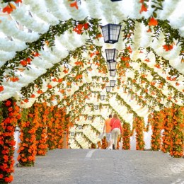 Flores de papel nas Festas do Povo de Campo Maior