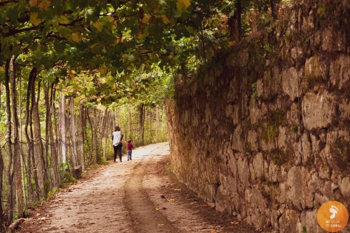 Em Cevide, terras de vinho, terras de alvarinho