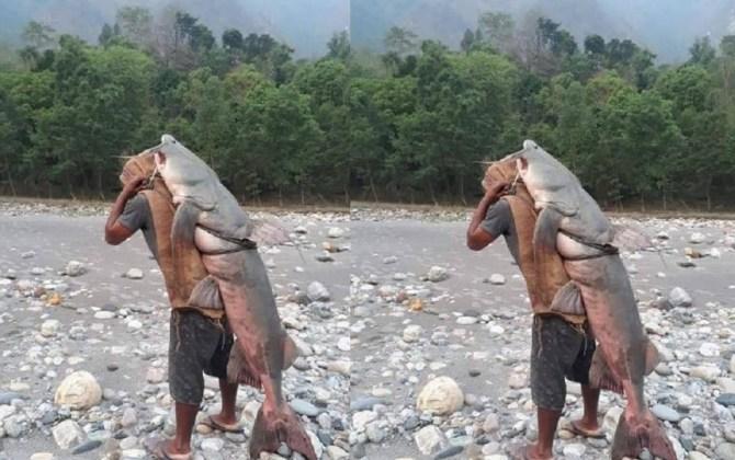कालीगण्डकीमा समातिएको ५५ केजीको विशाल माछालाई नाम्लोले बोकेर बजारमा बेच्न लगेको दृश्य भाइरल