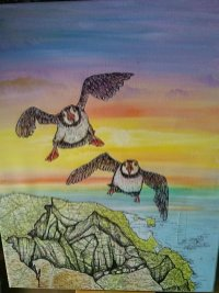 Sally Brackett - Puffins