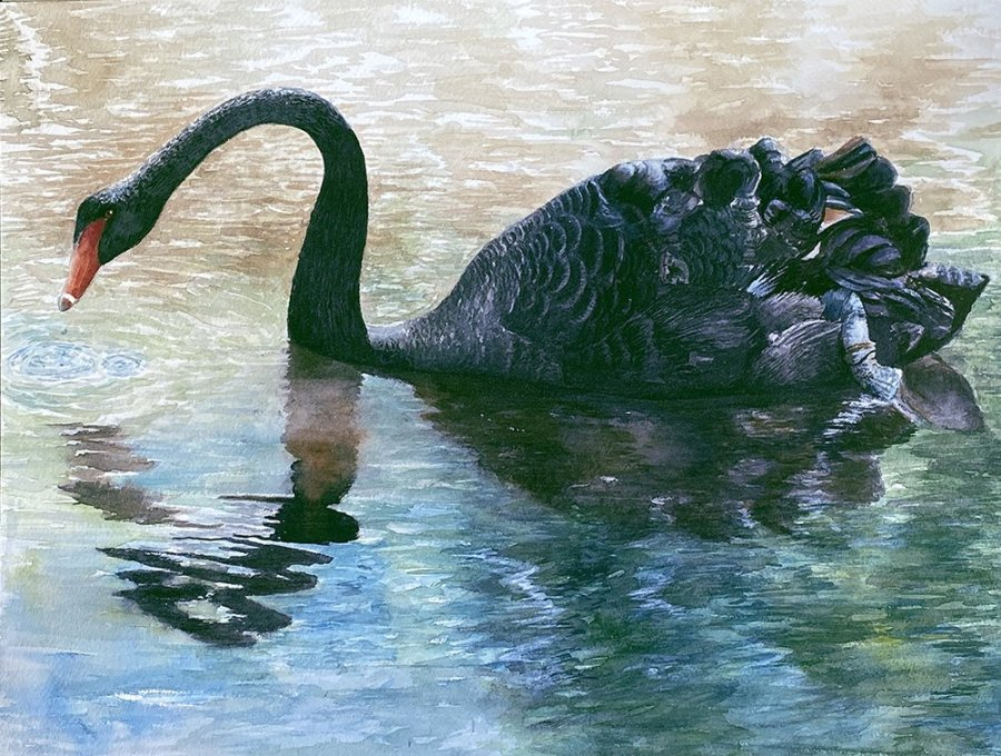 Black swan - Maxwell Neale