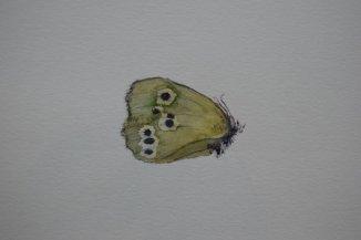 Christine Howard - Moth - Watercolour 30x 20 cm