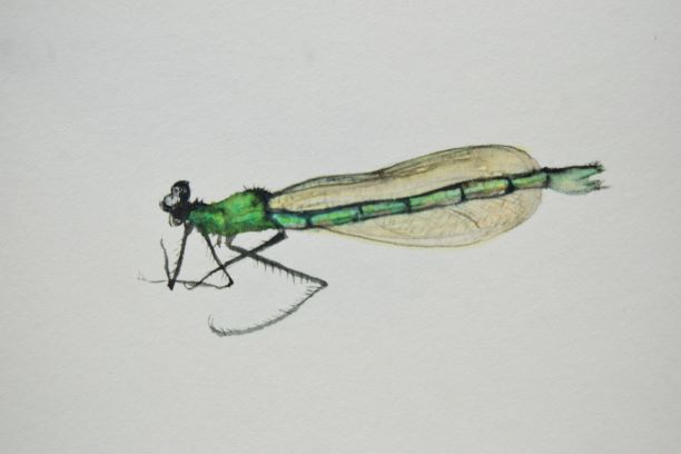 Christine Howard - Dragonfly