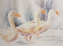 Clare Watson - Geese