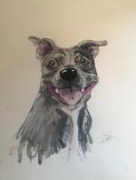 Elsa RT - Staffordshire Bull Terrier