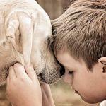 Ребенок просит собаку. Маленький секрет-проверка.