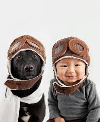 реклама на сайте о собаках