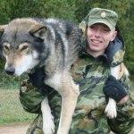 Собака Волкособ — пес специального назначения