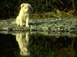 собака боится воды