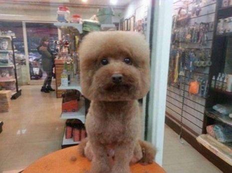 Собака тюлька