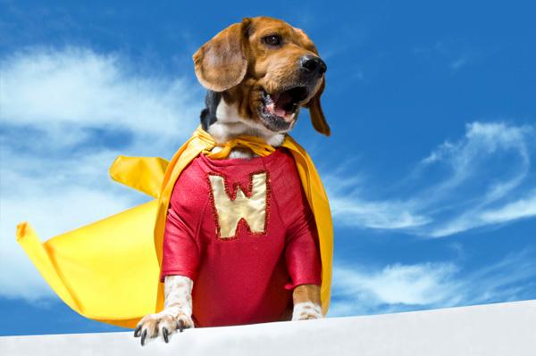 hero-dog