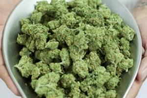 med_marijuana_file.widea