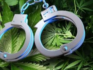 marijuana+crime