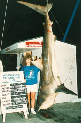 shark_narrowtooth_02930006