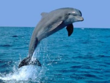 Cute-dolphins-dolphins-6939939-1024-768