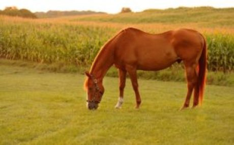 the-aging-horse