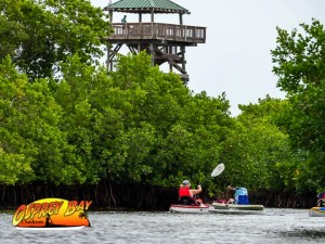 Paddling the Robinson Preserve with observation tower in distance.