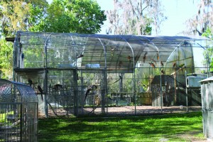 Bird Sanctuary_1-Aviary