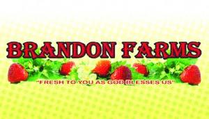 Strawberry_s.brandonfarms