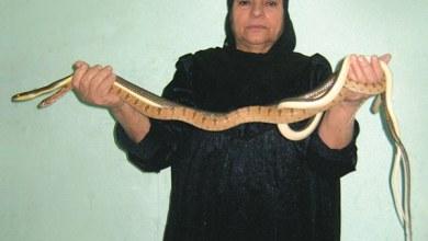 Photo of «صائدة الثعابين».. 50 عامًا في مواجهة الموت