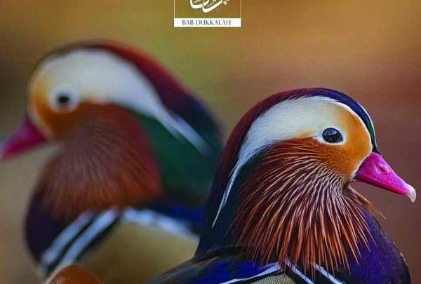 محمية «باب دكالة» تحتضن نوادر الطيور والحيوانات