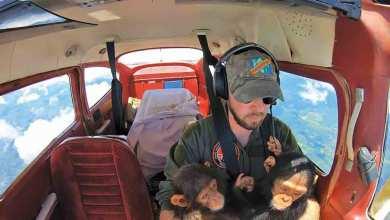 Photo of من جوائز «سوني» العالمية للتصوير لعام 2021  أفضل الصور.. صياد صديق للحوت وطيار ينقذ الشمبانزي!