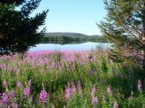 La natura finlandese._.foto G. Niotti