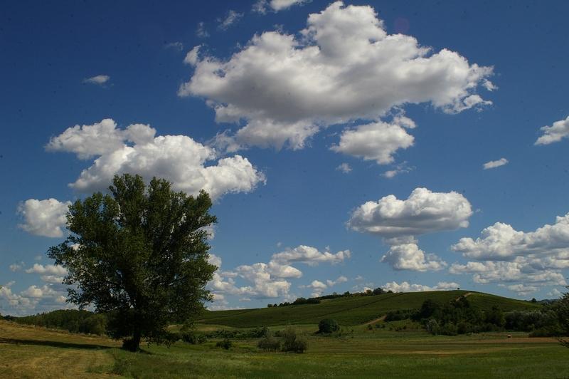 Attivit svolte dallOsservatorio del Paesaggio per il Monferrato e lAstigiano nellanno 2013