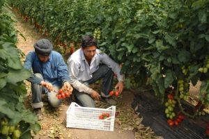 indiani-sikh-foto-3-pomodori