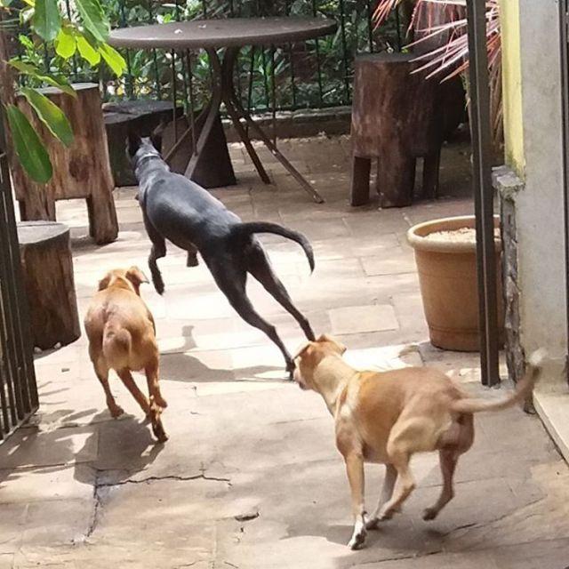 Sbado na creche! ossosdooficio crechedecaes hoteldecaes petdaycare pethotel daycare cachorrohellip