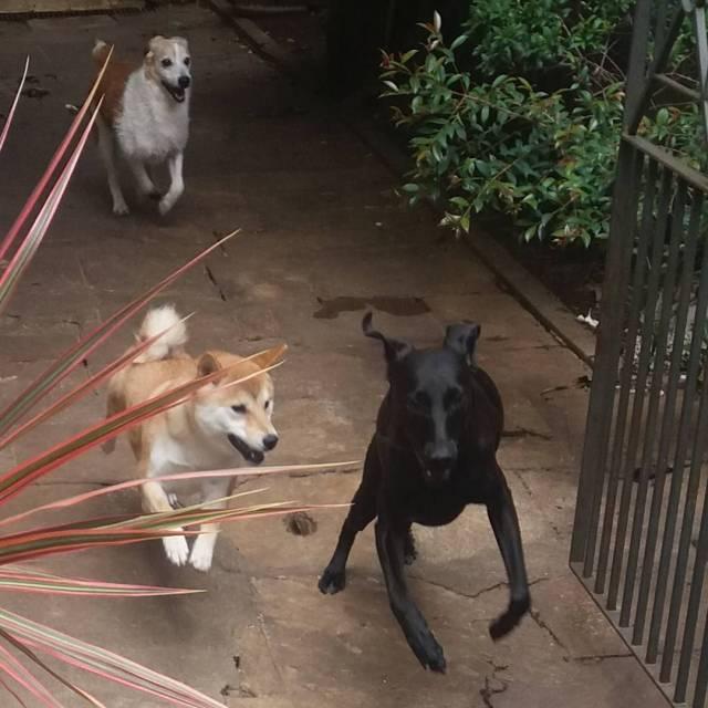 ossosdooficio crechedecaes hoteldecaes petdaycare pethotel daycare pet caes cachorro doghellip