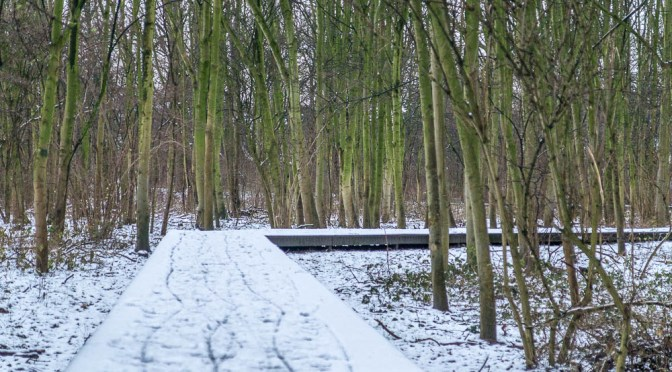 My Hometown Oostende:  #3 February Winter Impressions