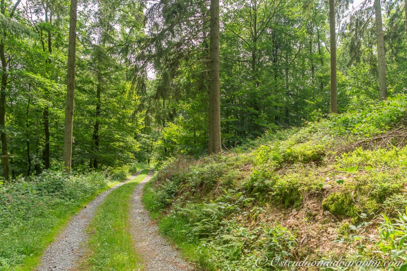 Walking Paths in the Forest