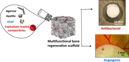 Fabrication of a nanoparticle-containing 3D porous bone scaffold with proangiogenic and antibacterial properties