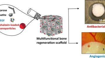 Regenerative Medicine Article Image