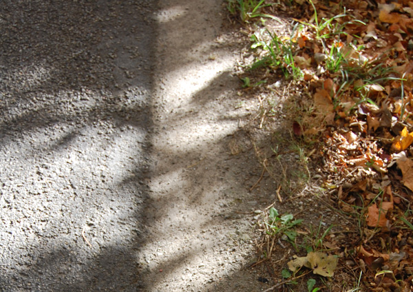 Road side vegetation