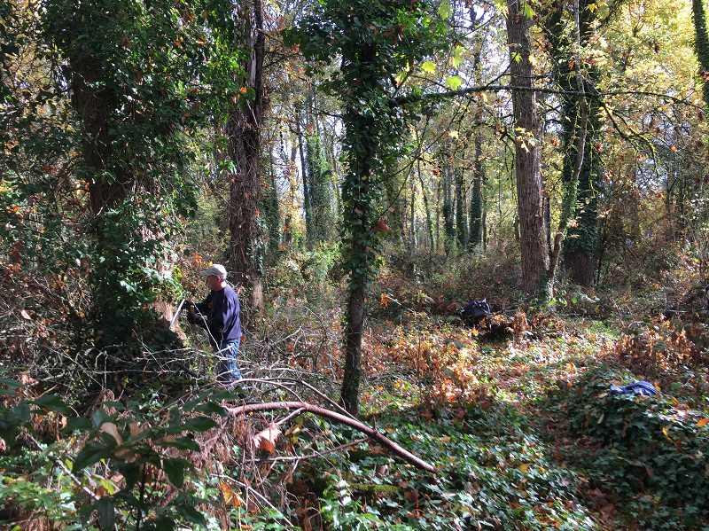 Restoring another white oak woodland