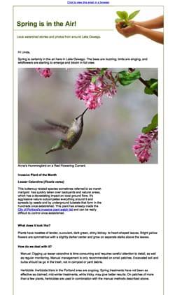 OLWC Spring 2019 Newsletter