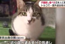 Japonês deportado da Turquia por comer 5 gatos