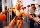 """Výstava Body Worlds se pomocí rozšířené reality dostane návštěvníkům hluboko """"pod kůži"""""""