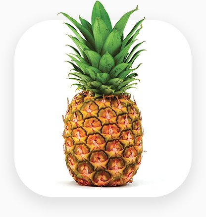 improve pineapple export by