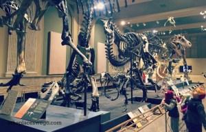 Dinosaur Discovery Museum Kenosha - Dinosaur Gallery